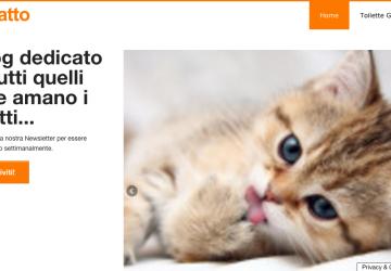 Blog sul gatto tutto sui gatti